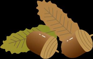 木の実のイラスト