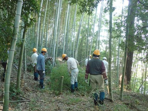 竹の伐採風景