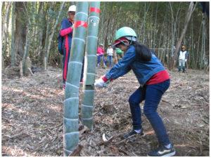 竹伐採作業風景