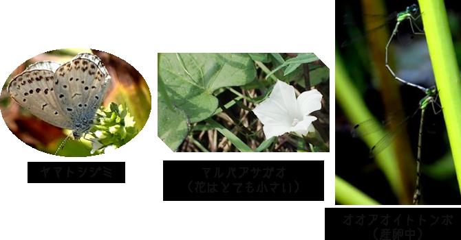 第15回調査で見られた虫たちと植物