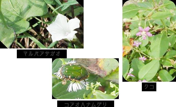 交野自然しらべたいで観察できた植物